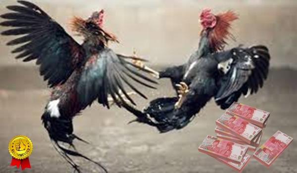 Cara Menaklukkan Judi Ayam S128