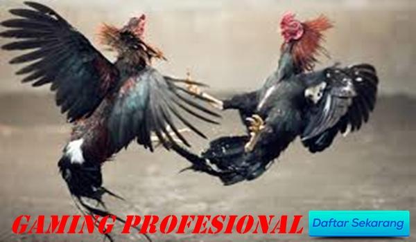 Gaming Profesional